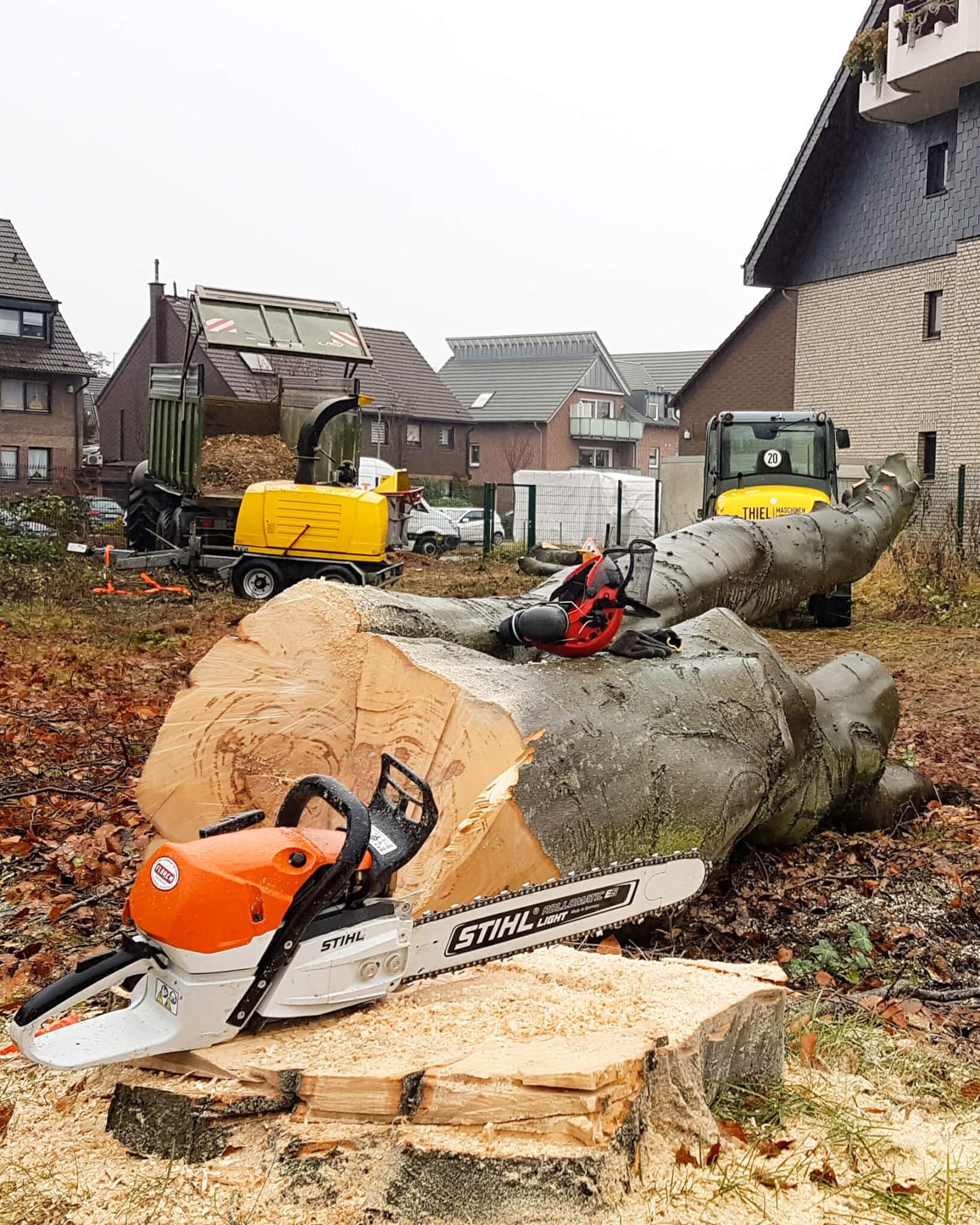 Abteilung Baumdienst: Baumfällung