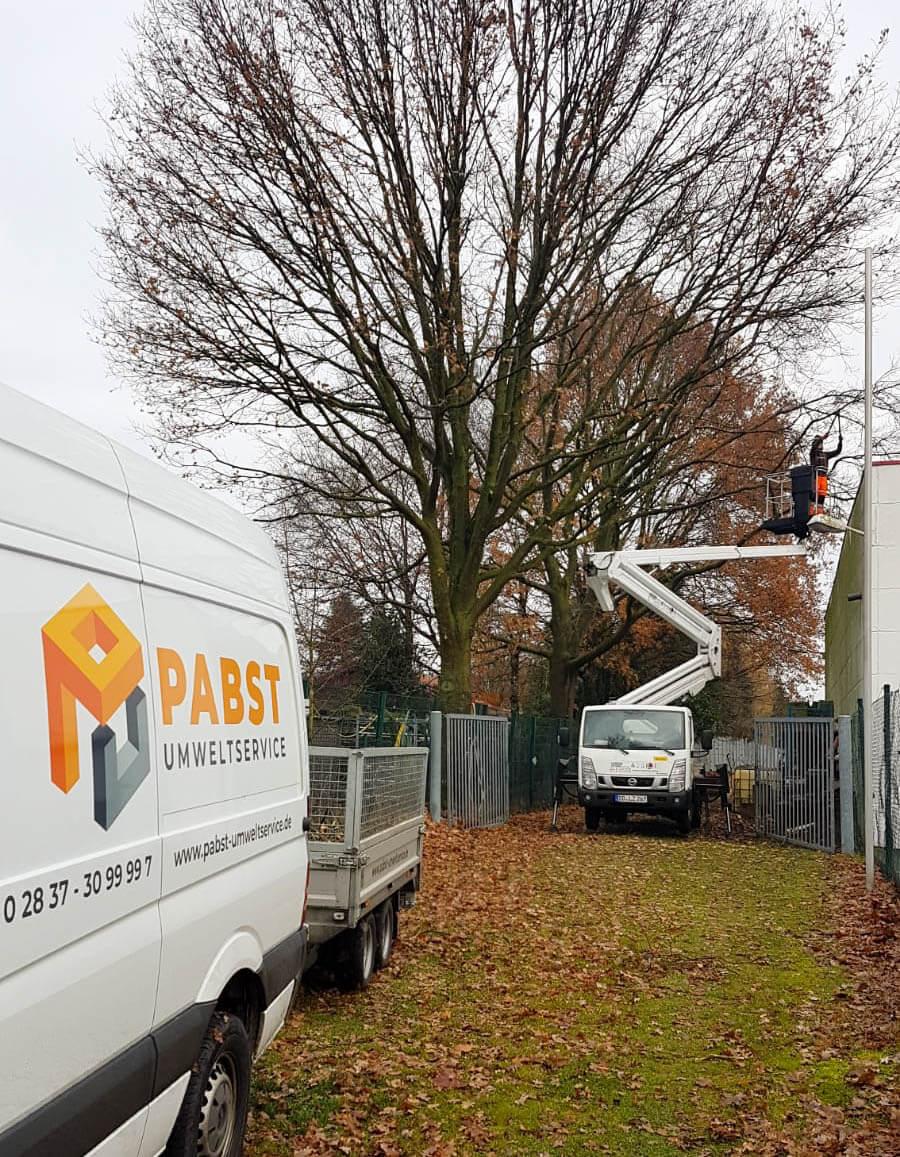 Abteilung Baumdienst: Baumpflege
