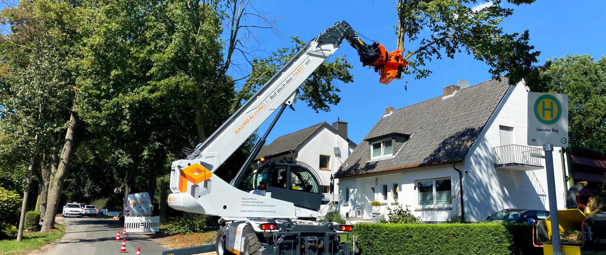 Maschinelle Baumfällung